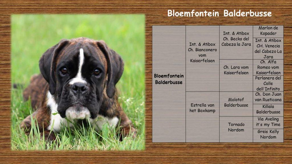 Deze afbeelding heeft een leeg alt-attribuut; de bestandsnaam is stamboom-website-Bloemfontein-1024x576.jpg