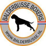 Balderbusse Boxers